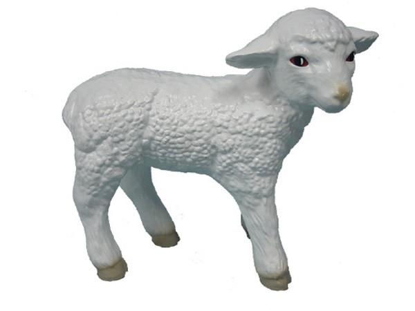 Lamm Schaf stehend