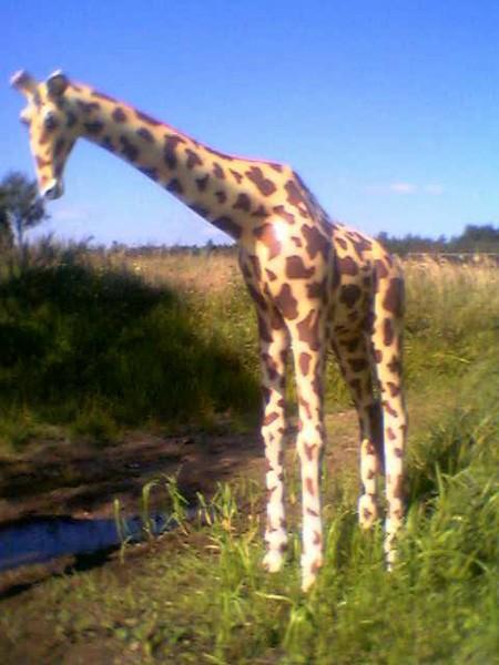Giraffe mittel