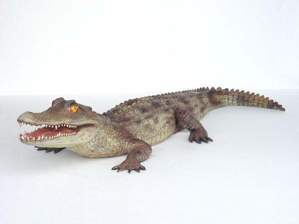 Kaiman Krokodil