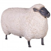 Schaf mit schwarzem Kopf groß