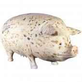 Altes dreckiges Hausschwein sehr groß
