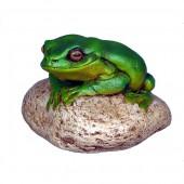 Frosch auf Stein klein