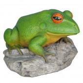 Frosch auf Stein groß