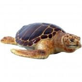 schwimmende Karettschildkröte