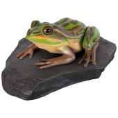 Grüner und goldener Frosch auf Stein