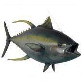Gelbflossen Tunfisch