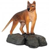 Tasmanischer Tiger stehend auf Fels