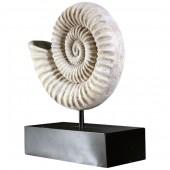 Nautilus Muschel auf Base