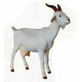 weiße Ziege mit Hörnern groß