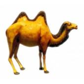 Kamel mit 2 Höckern