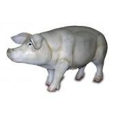 Schwein lebensgroß