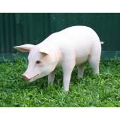 Rosa Schwein stehend