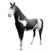 Araber Pferd gefleckt