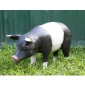 Schwarzweißes Schwein stehend