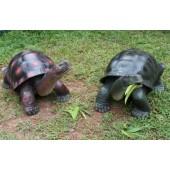 Grüne und rote Schildkröte