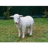 Weißes Schaf