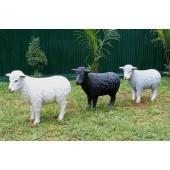 Schafe stehend weiß, schwarz und grau