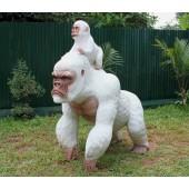 Weißer Gorilla mit Baby 2