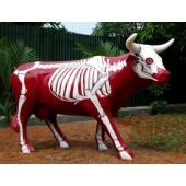 Kuh Skelett Rot