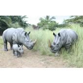 Nashorn Familie