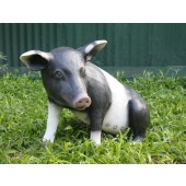 Schwarzweißes Schwein sitzend