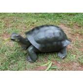 Grüne Schildkröte