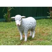 Graues Schaf