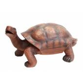Eisfach in der Schildkröte