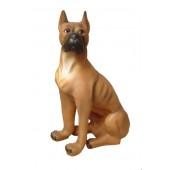 Boxer Kampfhund