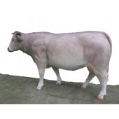 Französische Kuh