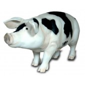 Schwein lebensgroß gefleckt