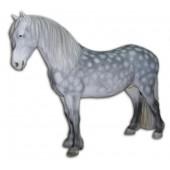 Schimmel Pferd