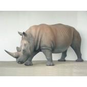 Nashorn groß