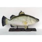 großer Barramundi Fisch auf Base