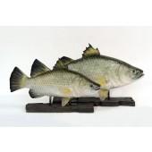 kleiner Barramundi Fisch auf Base