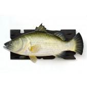 Großer Barramundi Fisch für Wand