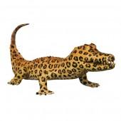 Kaiman im Leopardenlook