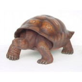 Schildkröte braun