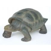 Schildkröte realistische Bemalung