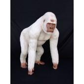 Weißer Berggorilla