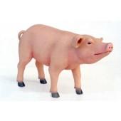 Ferkel das Schwein stehend