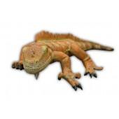 Leguan Orange
