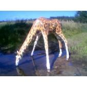 Giraffe trinkend
