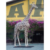 Giraffe groß