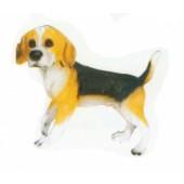 Beagle laufend