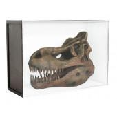 Dinosaurier Fossil Tyrannosaurus in Schaukasten