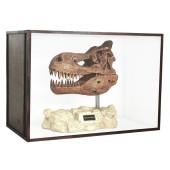 Dinosaurier Fossil Tyrannosaurus auf Ständer in Schaukasten