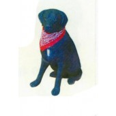Labrador sitzend mit Halstuch