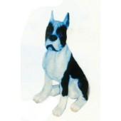 Boston Terrier sitzend schwarz weiß