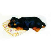 Rottweiler Welpen liegend auf Kissen